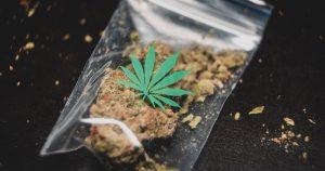 Cannabis - A Schedule 1 Drug