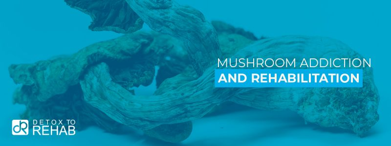 Mushroom Addiction Rehab Header
