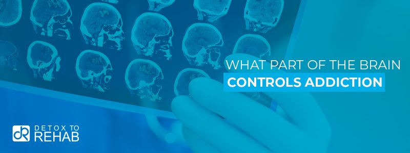What Part of the Brain Controls Addiction Header